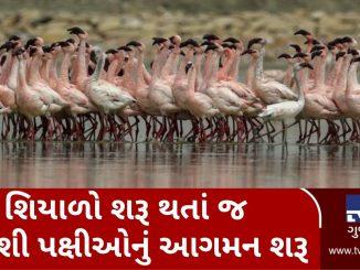 Migratory birds reach Padra, attracts tourists Vadodara