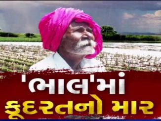 Unseasonal rain left farms waterlogged, Ahmedabad's Bhal village farmers in deep tension