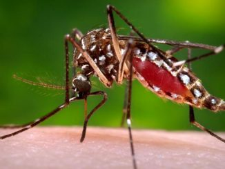 20-years-old-youth-died-of-dengue-in-vadodara-death-toll-reaches-11
