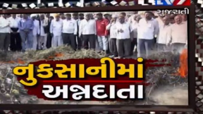 Surendranagar farmers write to PM Modi, seeking compensation for crop damage