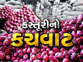 Gujarat: Onion prices rise after crop damage due to unseasonal rains