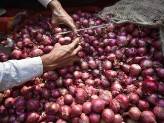 Rajkot: Auction of onions begins at New marketing yard