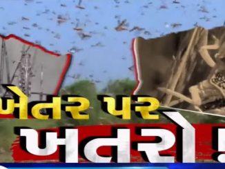 Locust swarm destroy crops in Patan bija divse pan teed nu aakraman yathavat