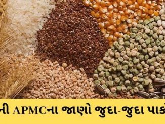 Gujarat All APMC Latest rates of 30th November 2019 Gujarat ni badhij APMC na Mandi rates