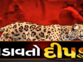 Case of man-eating leopard: Amreli Collector advises people not to enter farms after sunset
