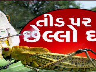 Locust swarms hit crops in Banaskantha, authority on toes | Tv9GujaratiNews