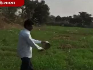 Wind flow brings swarm of locusts in Mehsana, farmers fear crop failure