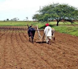 Crop insurance scheme likely to become voluntary for farmers