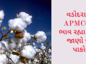 Gujarat All APMC Latest rates of 9th December 2019