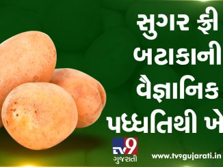 Dhartiputra: Sugar-free potato farming with scientific method
