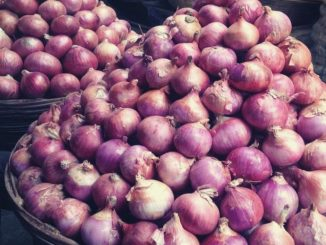 Bharuch: Women switch to spring onions due to skyrocketed onion prices
