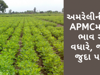 Gujarat All APMC Latest rates of 21st January 2020