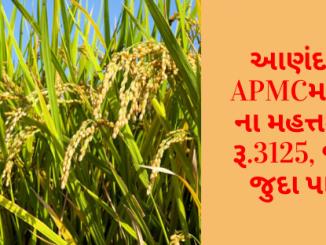 Gujarat All APMC Latest rates of 24 January 2020