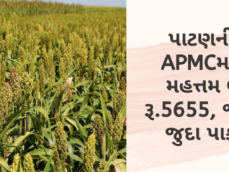 Gujarat All APMC Latest rates of 15th January 2020