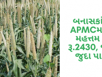 Gujarat All APMC Latest rates of 20th January 2020