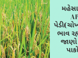Gujarat All APMC Latest rates of 17th January 2020