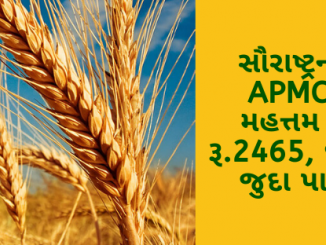 Gujarat All APMC Latest rates of 22nd January 2020