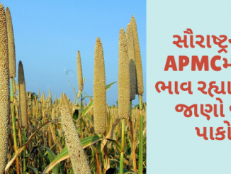 Gujarat All APMC Latest rates of 28 January