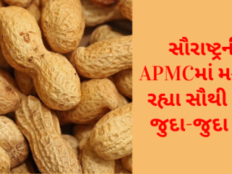 Gujarat All APMC Latest rates of 13th January 2020