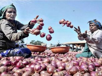 Gujarat: Why are farmers in Bhavnagar not getting fair price of onions?