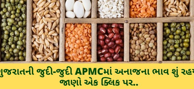 Gujarat All APMC Latest rates of 11th January 2020 Gujarat ni badhij APMC na Mandi rates