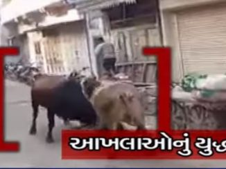 On cam: People panic as bulls start fighting amid market in Botad
