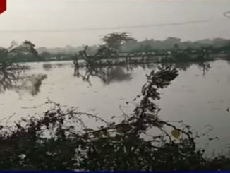 Breach in canal floods agricultural land in Vav, Banaskantha