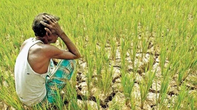 Winter crops fail after monsoon!farmers' are in trouble