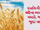 Gujarat All APMC Latest rates of 16th January 2020