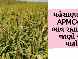 Gujarat All APMC Latest rates of 23rd January 2020