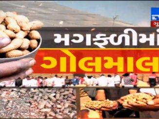 Junagadh : Farmers allege irregularities in Groundnut Procurement, Authority assures probe