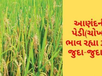 Gujarat All APMC Latest rates of 5 February 2020 Gujarat ni badhij APMC na Mandi rates