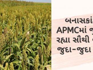 Gujarat All APMC Latest rates of 12 February 2020 Gujarat ni badhij APMC na Mandi rates