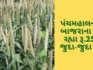 Gujarat All APMC Latest rates of 7 February 2020 Gujarat ni badhij APMC na Mandi rates