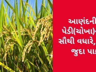 Gujarat All APMC Latest rates of 28 February 2020 Gujarat ni badhij APMC na Mandi rates