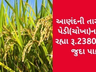 Gujarat All APMC Latest rates of 13 February 2020 Gujarat ni badhij APMC na Mandi rates
