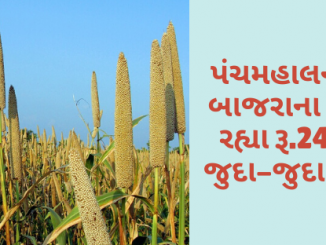 Gujarat All APMC Latest rates of 27 February 2020 Gujarat ni badhij APMC na Mandi rates
