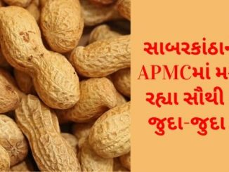 Gujarat All APMC Latest rates of 10 February 2020 Gujarat ni badhij APMC na Mandi rates