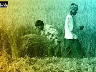 union budget 2020 india farmers and agriculture sector budget 2020 kheduto ane kheti mate sarkar e budget ma kari aa mukhya vato