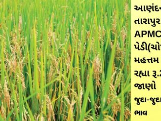 Gujarat All APMC Latest rates of 19th february 2020 Gujarat ni badhij APMC na Mandi rates