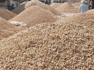 Bhesan groundnut scam case Market yard manager reveals names of people involved