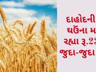 Gujarat All APMC Latest rates of 24 February 2020 Gujarat ni badhij APMC na Mandi rates