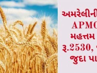 Gujarat All APMC Latest rates of 11 February 2020 Gujarat ni badhij APMC na Mandi rates