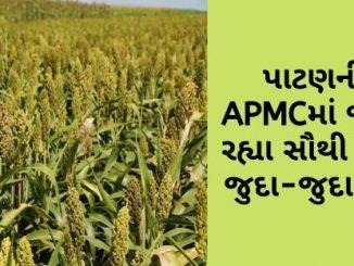 Gujarat All APMC Latest rates of 25 February 2020 Gujarat ni badhij APMC na Mandi rates