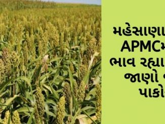 Gujarat All APMC Latest rates of 4 February 2020