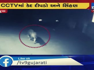 Lioness, Leopard sighted roaming the streets in Amreli
