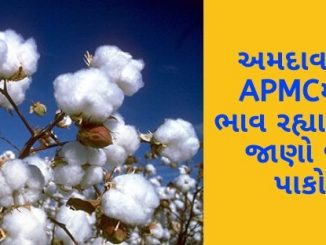 Gujarat All APMC Latest rates of 14 February 2020