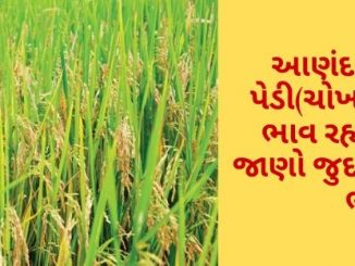 Gujarat All APMC Latest rates of 12 March 2020 Gujarat ni badhij APMC na Mandi rates
