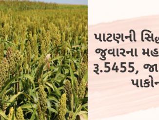 Gujarat All APMC Latest rates of 19 March 2020 Gujarat ni badhij APMC na Mandi rates