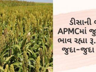 Gujarat All APMC Latest rates of 6 March 2020 Gujarat ni badhij APMC na Mandi rates